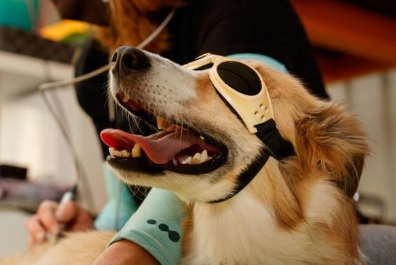 thérapie laser chien